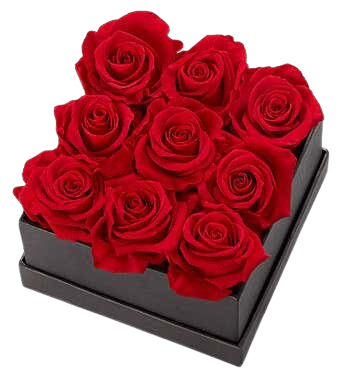 9 Red Preserved Roses