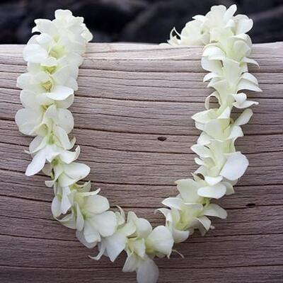 Lei White Hawaiian Orchid