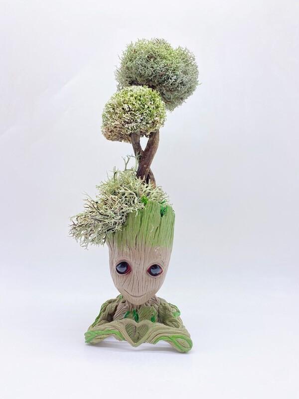 Дерево из цетрарии Грут