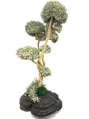 Дерево из Цетрарии - розмарин и тутовник