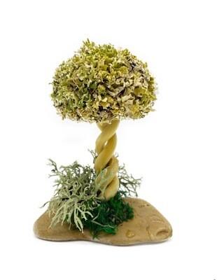 Деревце из Цетрарии для влюбленных