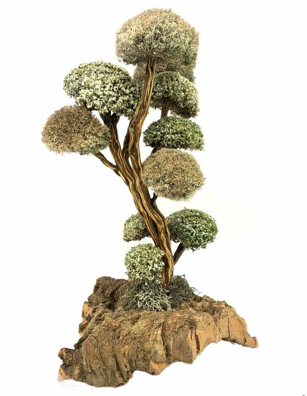 Дерево с кронами из цетрарии