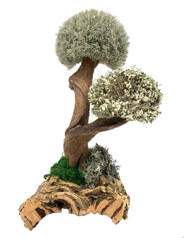 Дерево с кронами цетрарии и кладонии