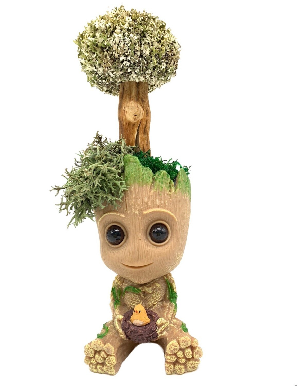 Грут малыш с деревом цетрарии