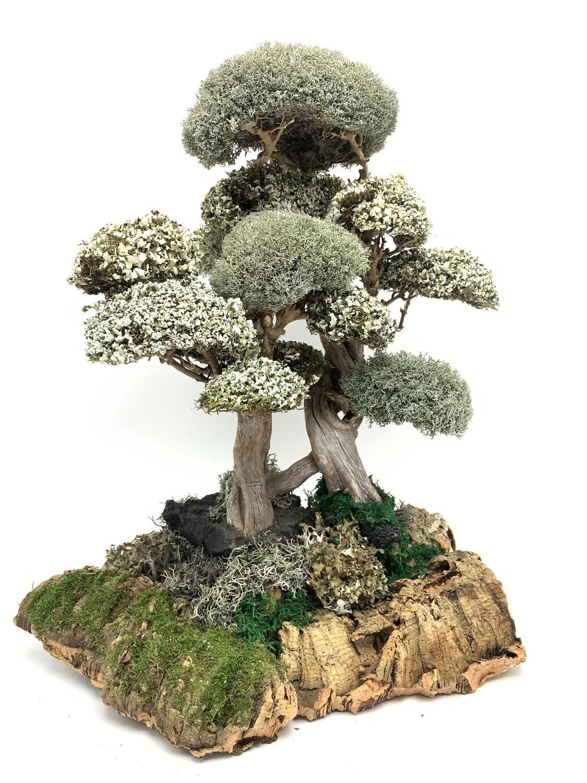 Композиция деревья с кронами цетрарии