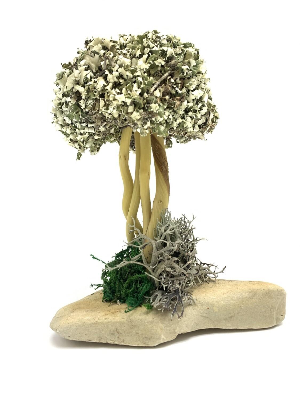 Деревце с кроной цетрарии на лиане