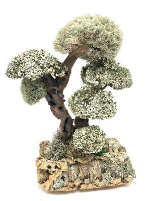 Дерево с кронами цетрарии