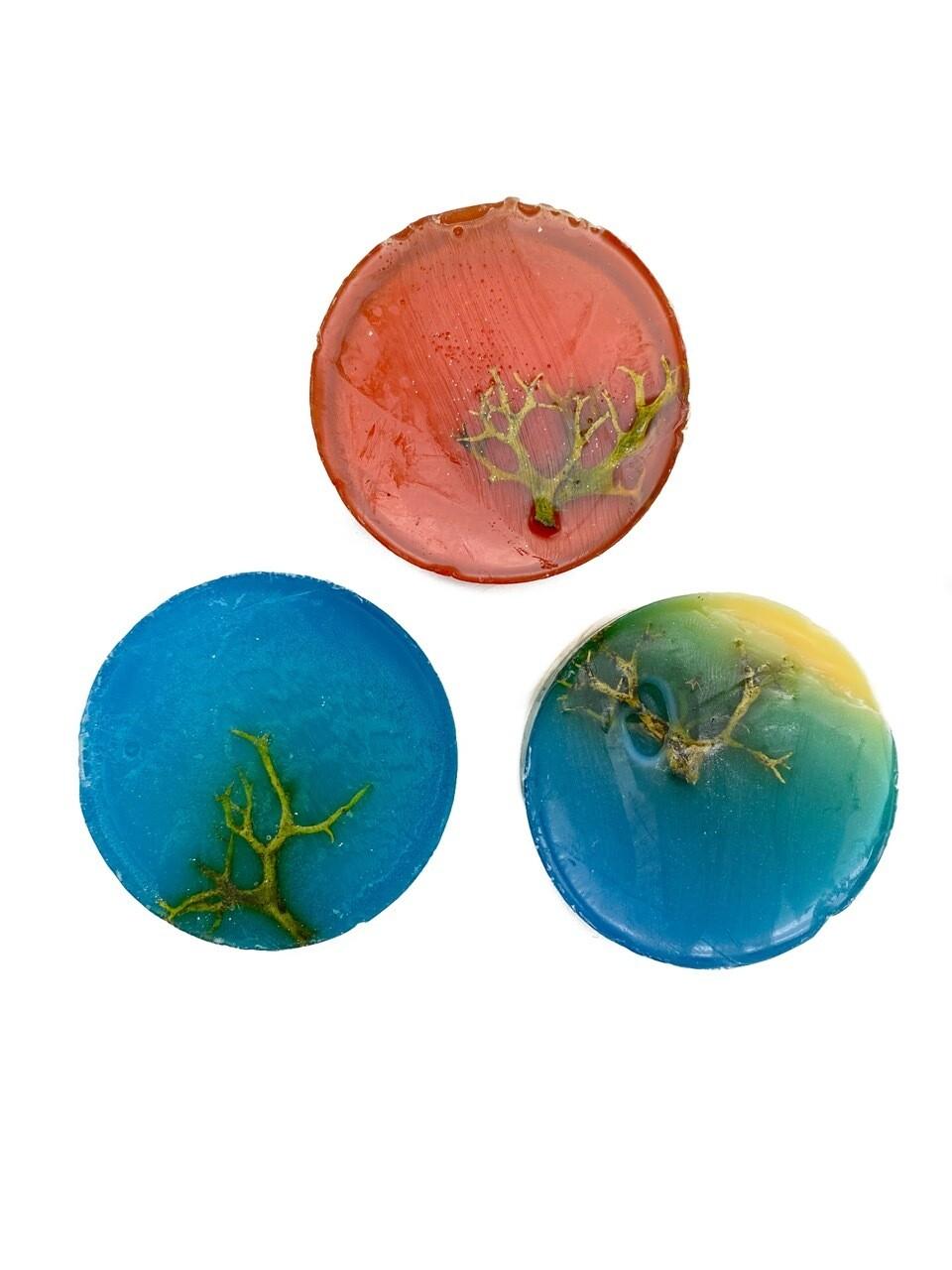 Мыльные шайбы из цетрарии 3шт для разных типов кожи