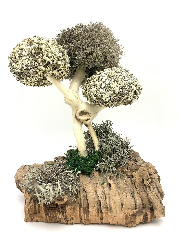 Деревце из цетрарии на подарок