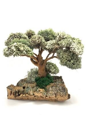 Дерево с кронами Цетрарии «Бесстыдница»