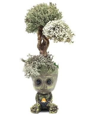 Малыш грут с деревом цетрарии