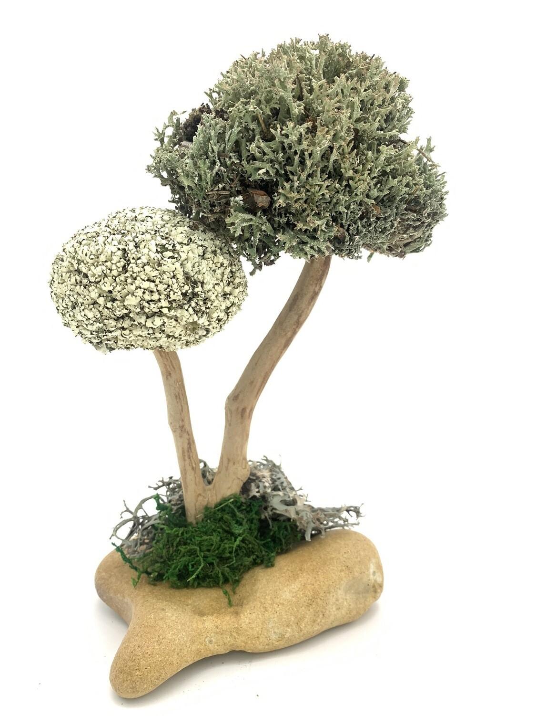 Деревце с кронами цетрарии и пармелии