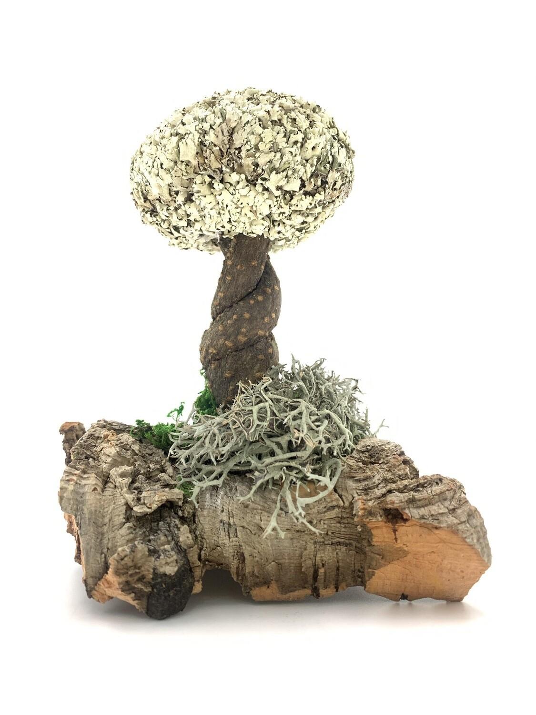Деревце лиана с кроной цетрарии