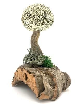 Деревце с кроной цетрарии