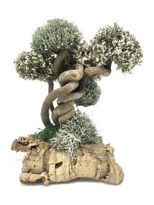 Дерево лиана с кронами цетрарии