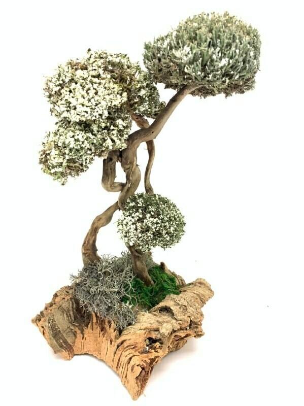 Дерево с кронами из белой и голубой цетрарии