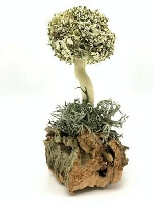 Миниатюрное дерево из цетрарии
