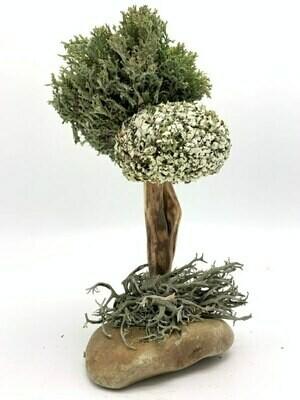 Дерево из исландского мха