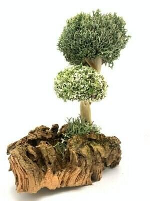Дерево с кроной из лечебной цетрарии