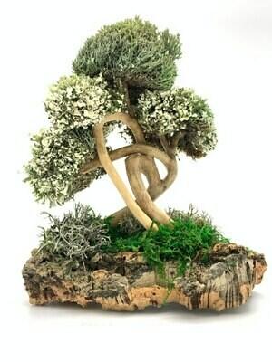 Интерьерное деревце из цетрарии