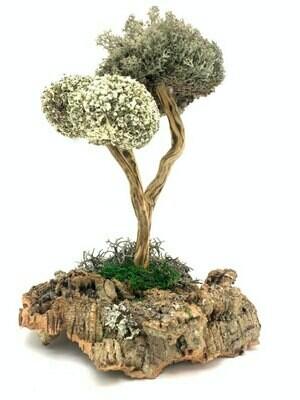 Деревце из цетрарии со стволом из розмарина