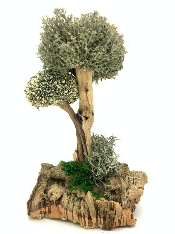 Сухоцвет цетрарии в виде дерева