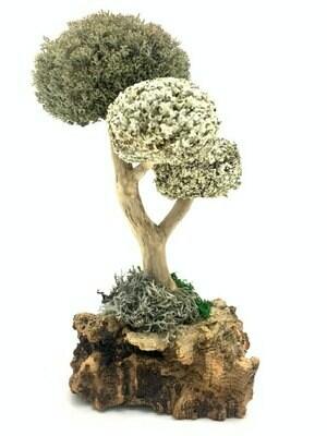 Интерьерное дерево из цетрарии
