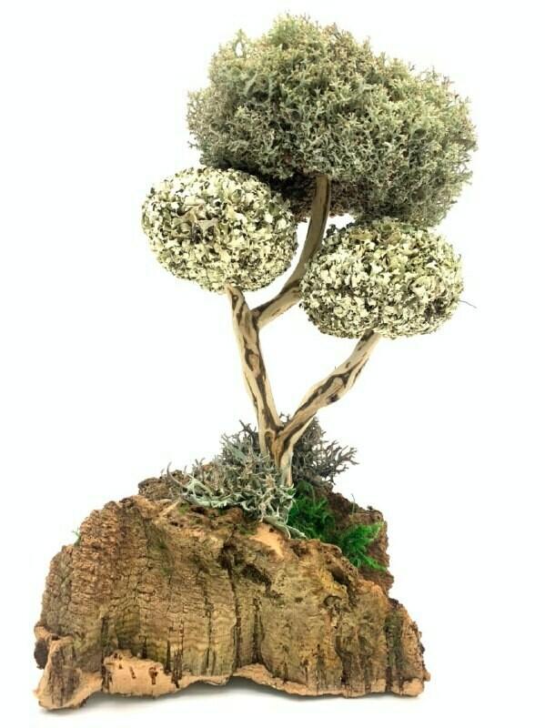 Дерево с пышными кронами из цетрарии