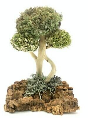 Деревце из белой цетрарии и пармелии