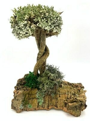 Дерево с переплетенным стволом из лианы