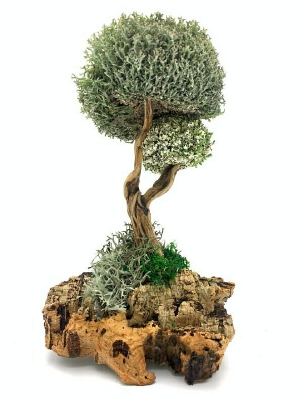 Дерево с кронами из пармелии и цетрарии