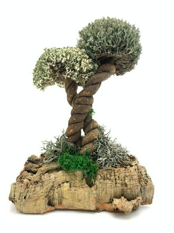 Дерево из цетрарии Средиземнорская Лиана