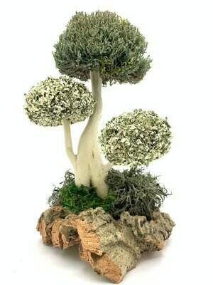 Дерево из цетрарии и пармелии