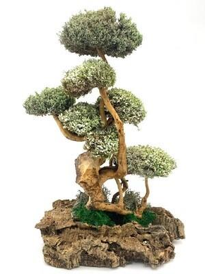 Величественное дерево из цетрарии