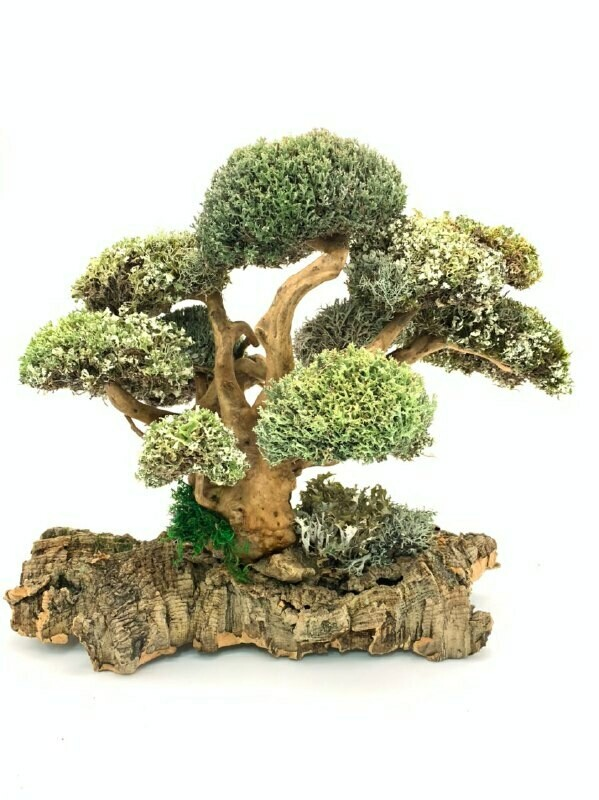 Символичное дерево из цетрарии