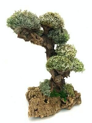 Мангровое дерево из цетрарии и пармелии