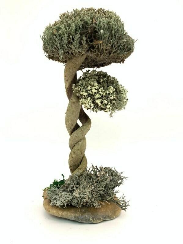 Деревце с цетрарией и пармелией