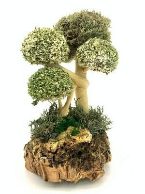 Забавное дерево из цетрарии