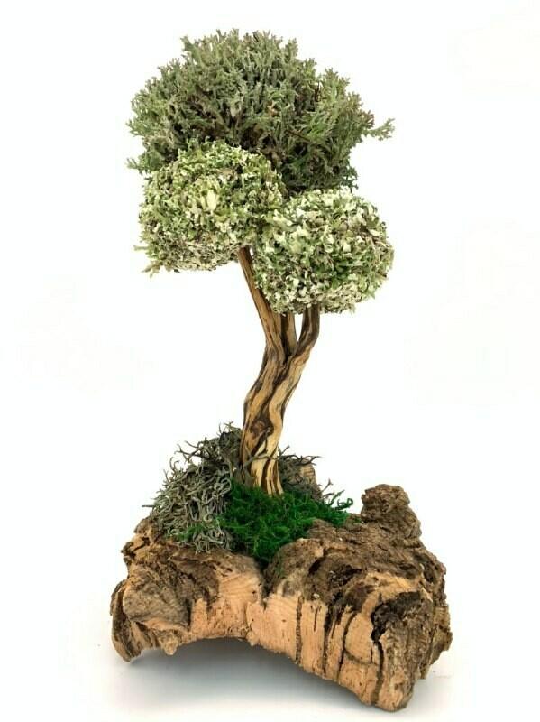 Дерево из целебной цетрарии