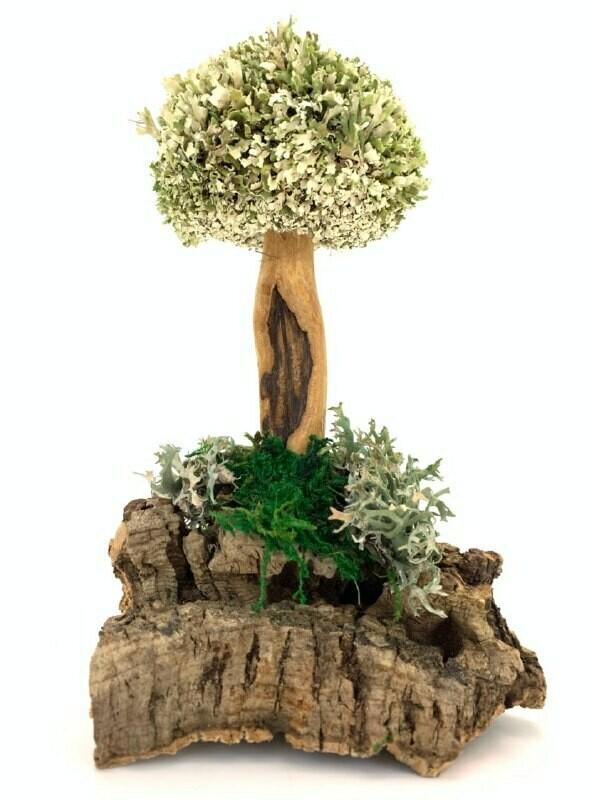 Дерево из белой цетрарии