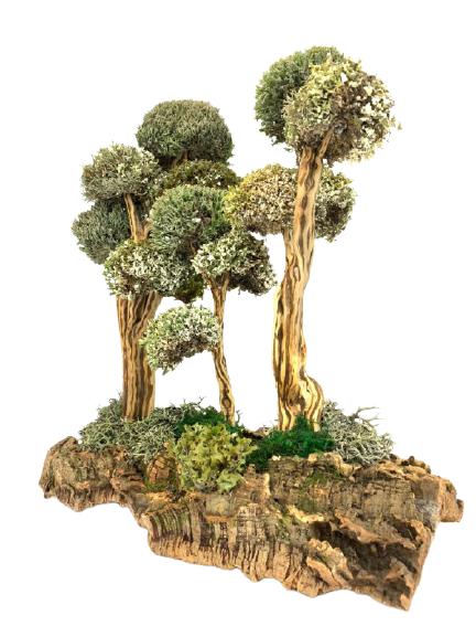 Композиция деревьев из цетрарии