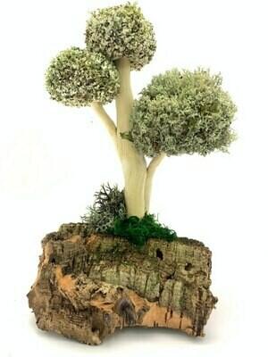 Декоративное дерево из цетрарии