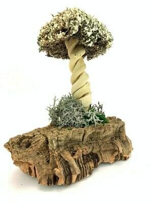 Изящное дерево из цетрарии