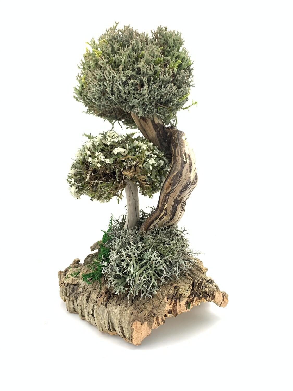 Деревце из цетрарии и пармелии