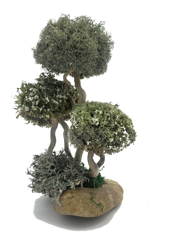 Декоративное деревце из цетрарии и пармелии