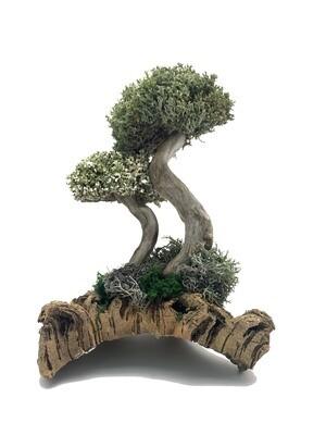 Интерьерное дерево из цетрарии и пармелии