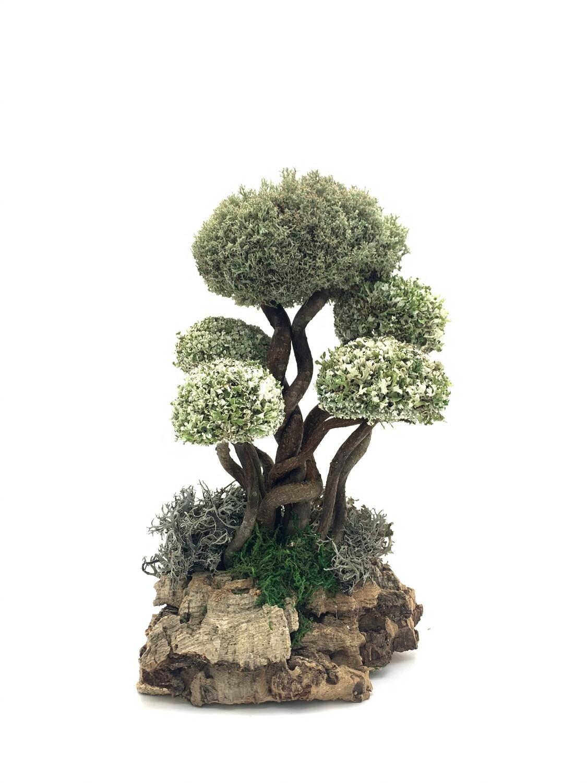 Многошапочное дерево с цетрарией