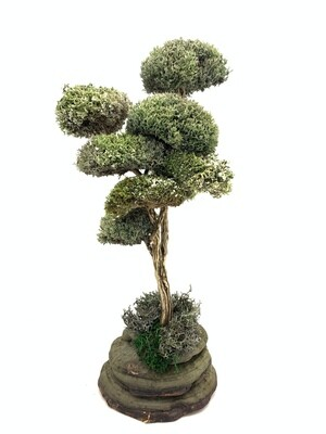 Изящное дерево с кронами из цетрарии