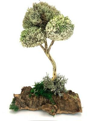 Изящное деревце из цетрарии