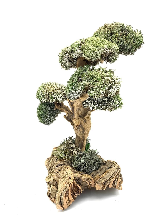 Роскошное дерево с бесстыдницей